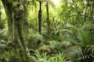 118450-400x265-New_Zealand_Herbal_Medicine