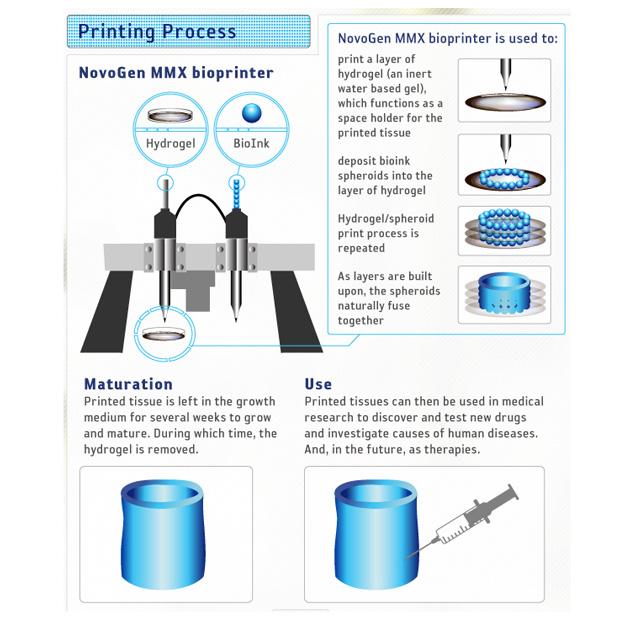 3D-Skin-Printint_Organovoprocess_630m