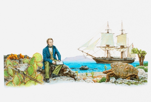 Illustration of Charles Darwin observing Galpagos Tortoise (Geochelone nigra), with HMS Beagle in background