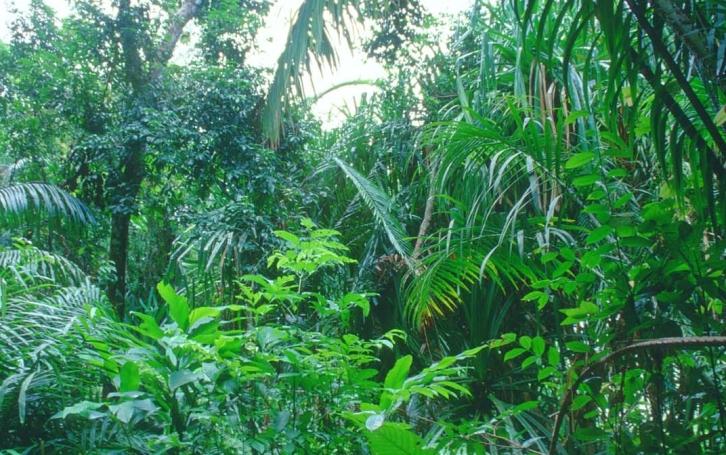 amazon-plant-diversity