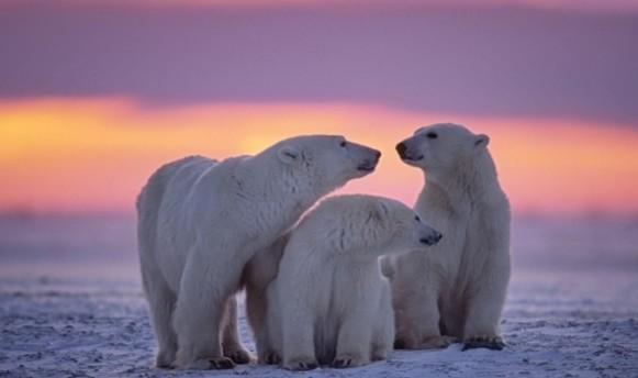 Bear_shutterstock_111333863_WEBONLY-676x450-675x400