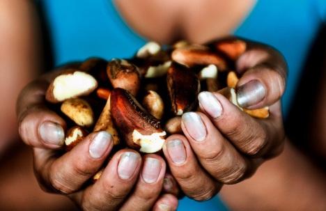 Brazil_nuts1