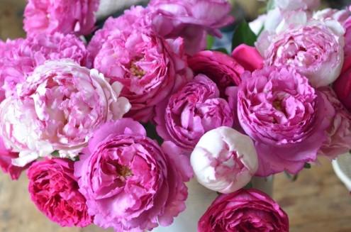 La-rose-Yves-Piaget-03-1024x678
