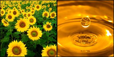 montage_tournesol-huile-d32d6