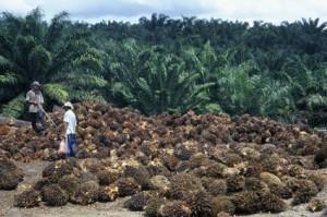 palm-oil-2-300x199