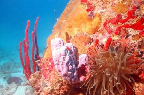 recif-corail