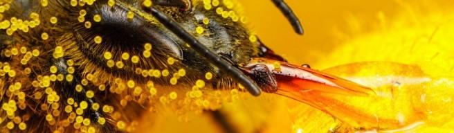 honeybee_1024-1024x300